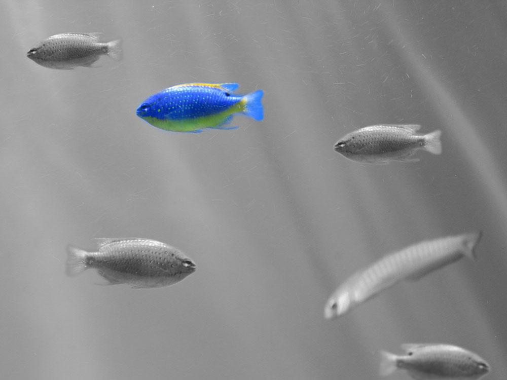 ذاكرة سمكة